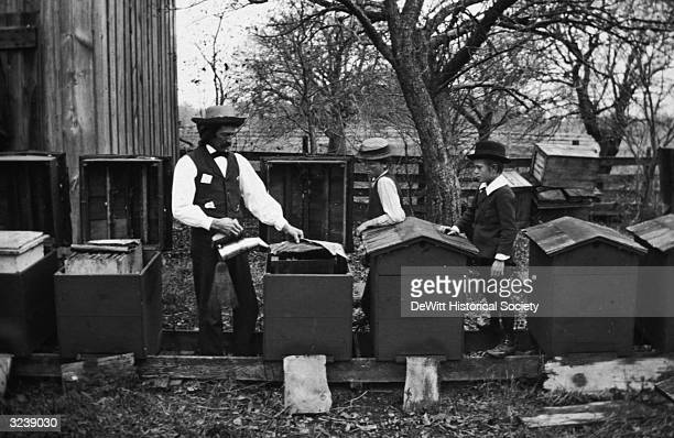 Apiarist N L Coggshall smokes bees inside an apiary while his sons watch