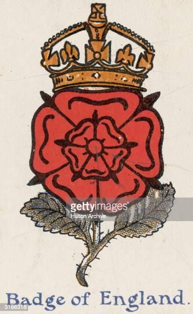 The national emblem of England a crowned Tudor rose