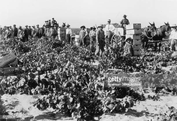 Asian and Latino workers pose in a field during the grape harvest at the Italian Vineyard Company Southern California