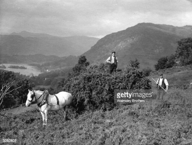 Farm labourers harvesting bracken on a hill overlooking Lake Windermere at Ambleside in Cumbria