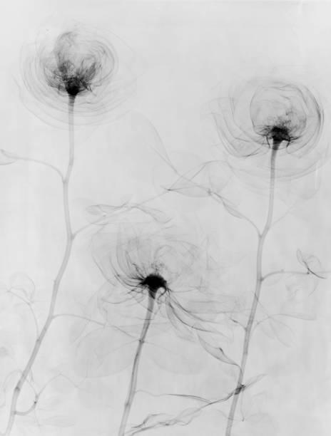 X-Ray Three Roses Wall Art