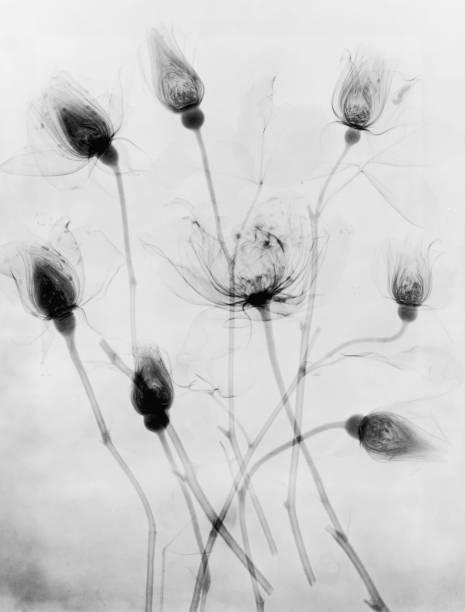 X-Ray Eight Roses Wall Art