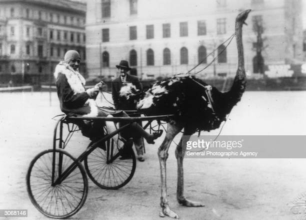 American singer and dancer Josephine Baker has harnessed an ostrich to pull a racing sulky.