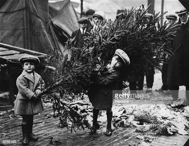 Two little boys dragging home their Christmas tree after choosing it at London's Covent Garden Market.