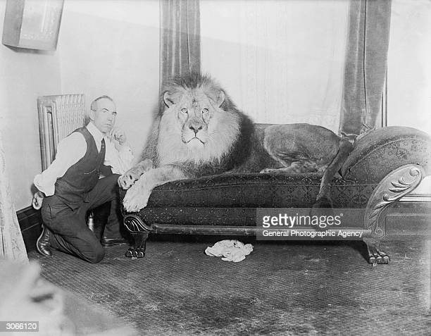 A lion lies on a couch while his trainer kneels beside him
