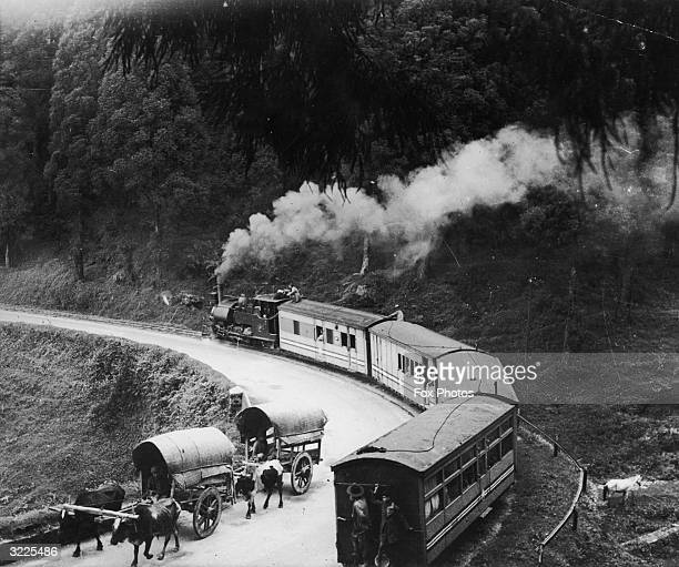 A train in India passing two bullock drawn carts on its way down the hill towards Darjeeling