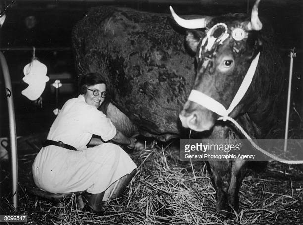 Miss Dorothy Cane the milkmaid who appeared on 'In Town Tonight' carries out her job