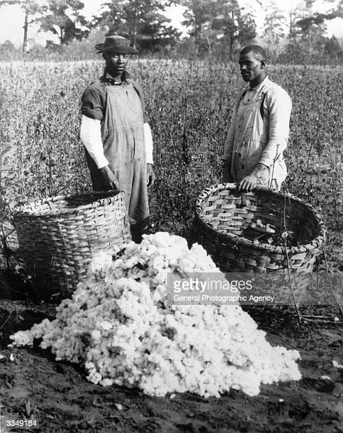 Two cotton pickers standing by a heap of cotton at the G A Starr Plantation in Greensboro South Carolina
