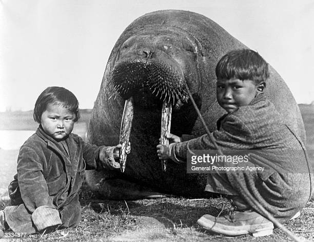Two Inuit children at Point Barrow Alaska holding the tusks of a large walrus probably killed for food