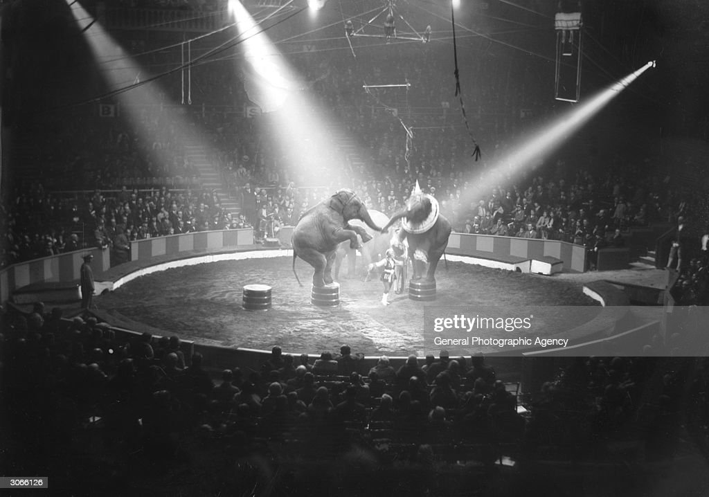 Under the spotlight in a circus ring two elephants balance on their hind legs.