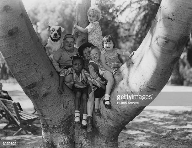 American children's film comedy group 'Our Gang' up a tree Patsy the dog Joe Cobb Farina Harry Spear Wheezer Mary Ann Jackson and Jean Darling...