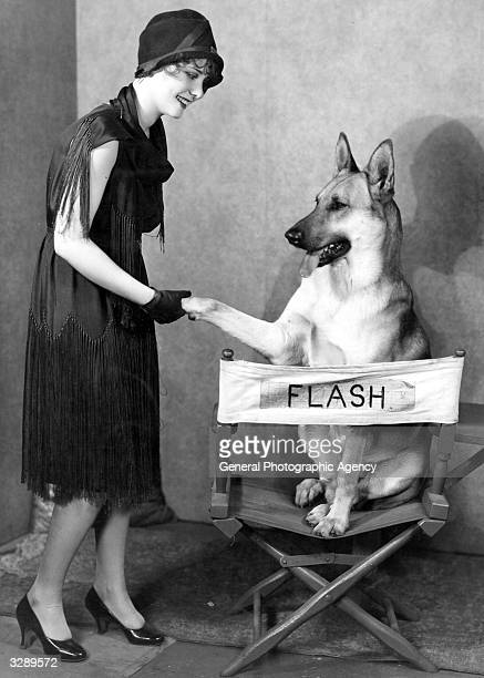 Flash the animal star who has his own chair, meets his next leading lady Gwen Lee. And shakes a paw.