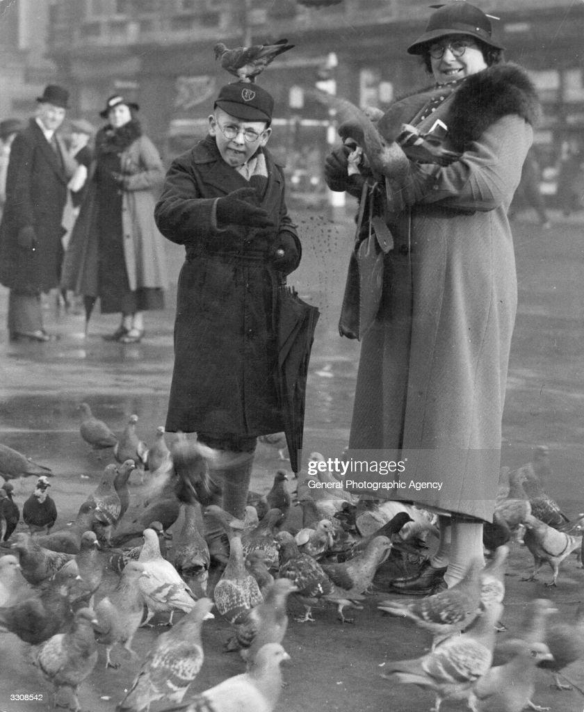 London Pigeons : News Photo