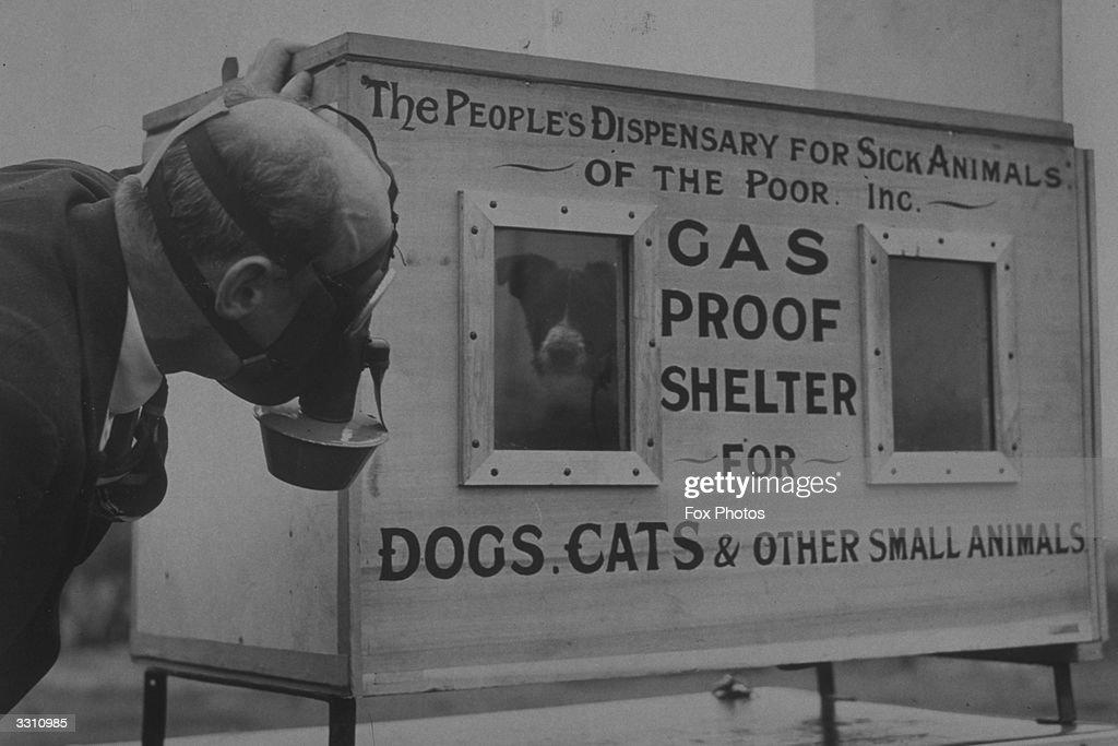 Dog Chamber : ニュース写真