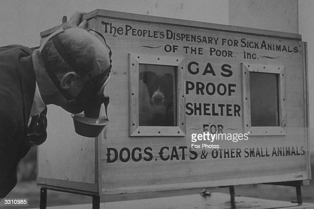 Dog in the gas-proof chamber invented by C.H. Gaunt, Chief Technical Superintendent of the People's Dispensary for Sick Animals.