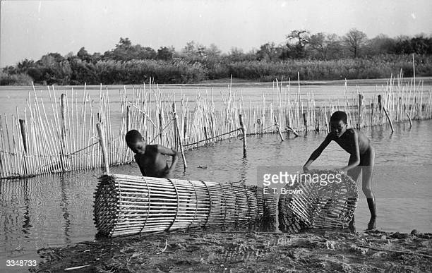 Boys in Lower Salu setting cane fishing traps Fish are a main source of food and if there is no rain famine strikes