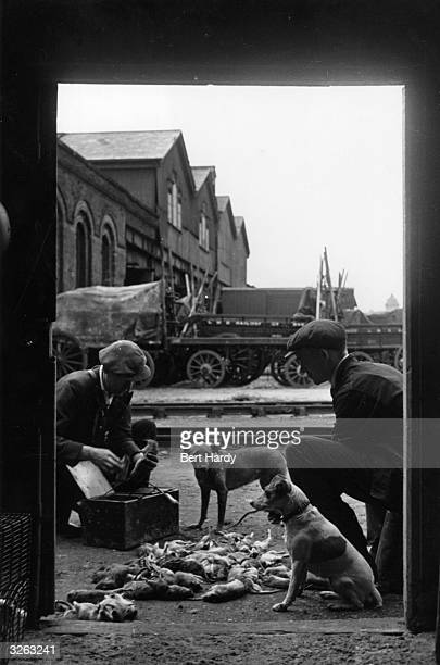 Two railway rat catchers with their haul seen through a doorway