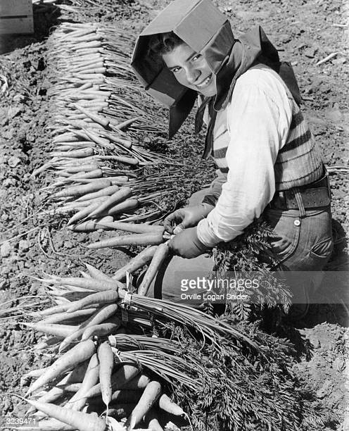 A farm worker wears a special hat to shield her head and face from the sun while harvesting carrots in California 1940s