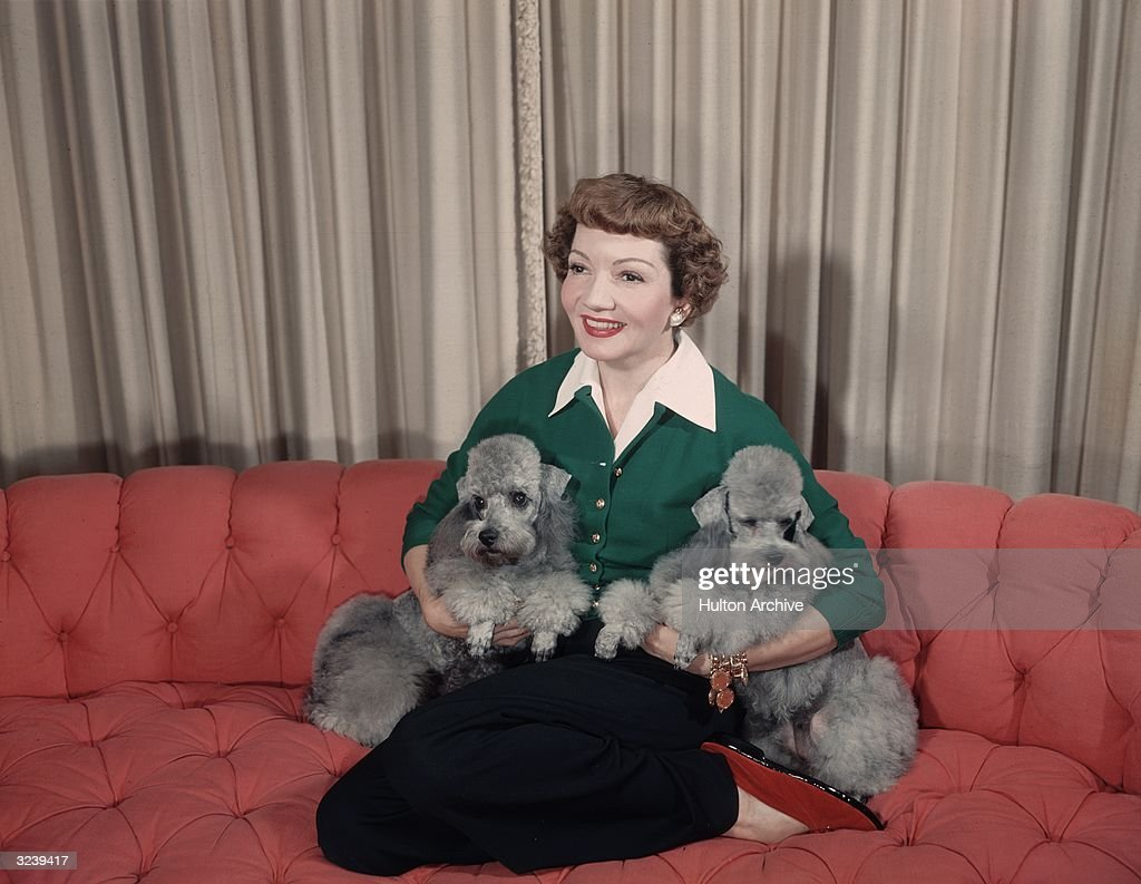 Portrait of American actor Claudette Colbert (1903 - 1996) smiling as she kneels on a salmon-colored couch and cradles her two identical grey poodles under her arms in her home.