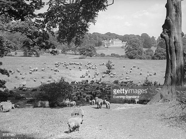 Sheep grazing on Hampstead Heath London with Kenwood House in the background