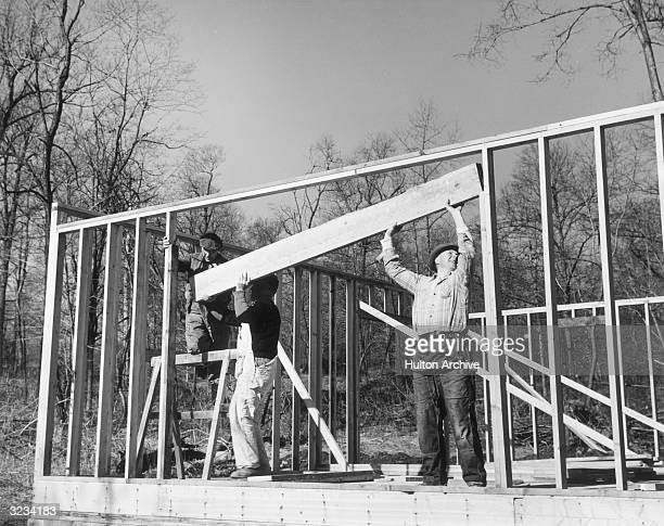 Three male construction workers help lift a wooden crossbeam into place while building the wooden frame of a house They wear flannel shirts and...