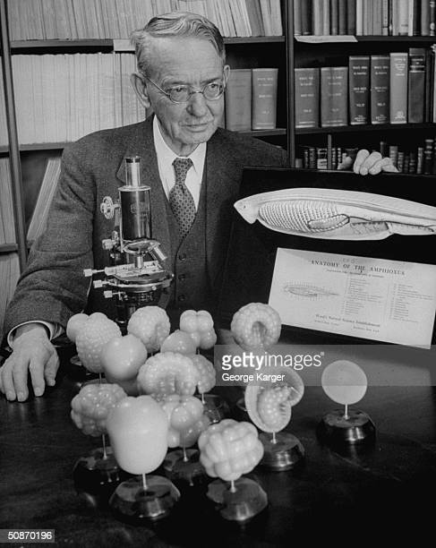 Prof. Edwin Grant Conklin sitting at table with microscope and anatomy models.