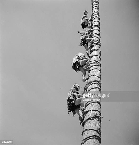 A group of Mexican voladores making their ascent up an eighty foot high pole in bird costumes before completing their ritual by dancing at its peak...