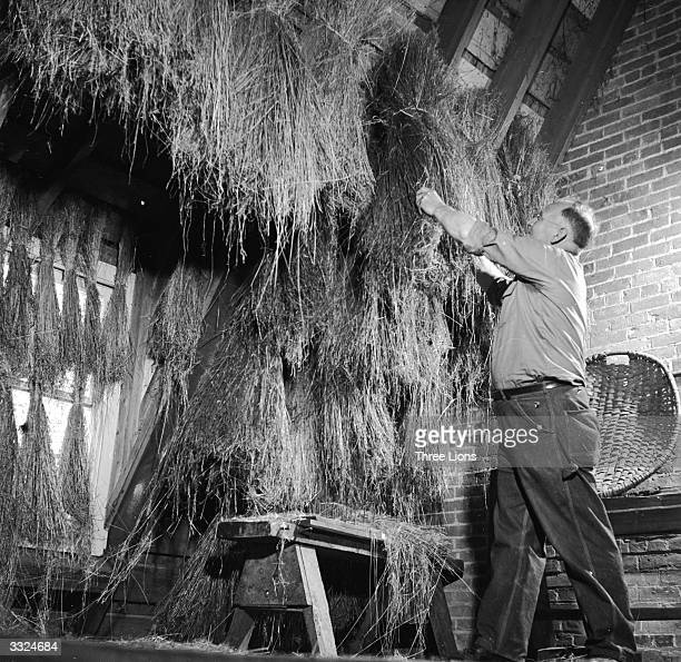 Flax straw hung up in an attic to dry at the Farmers Museum in the village of Cooperstown in New York State.