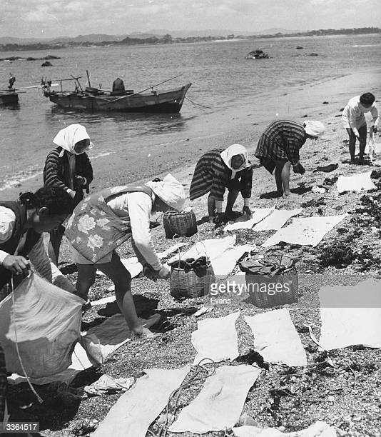 Pearl divers employed by the Mikimoto Cultured Pearl Works laying out their wet diving clothes on the beach to dry at Ago Bay