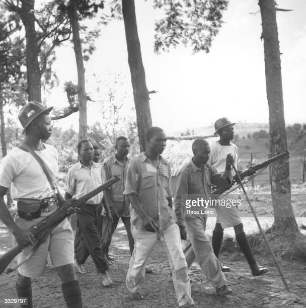 Men suspected of being members of the secret society Mau Mau are led away by Kenyan police during the uprising in Kenya