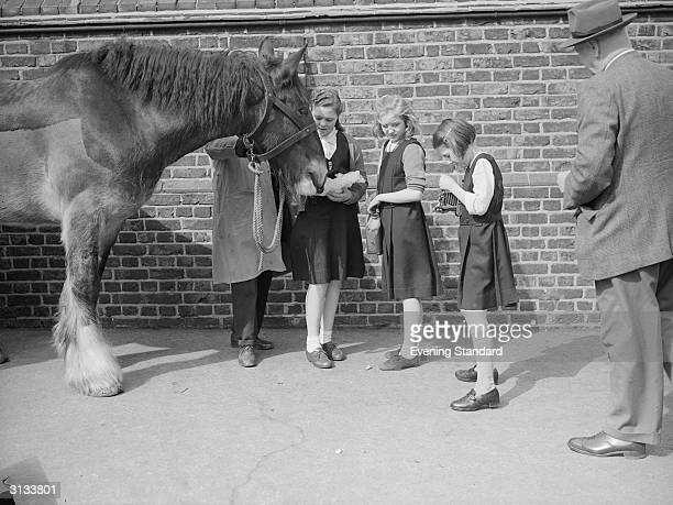 Schoolgirls feeding a carthorse at Parkside School while one girl takes a photograph
