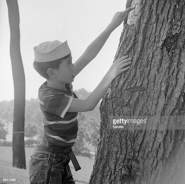 A child carves a tree with a penknife