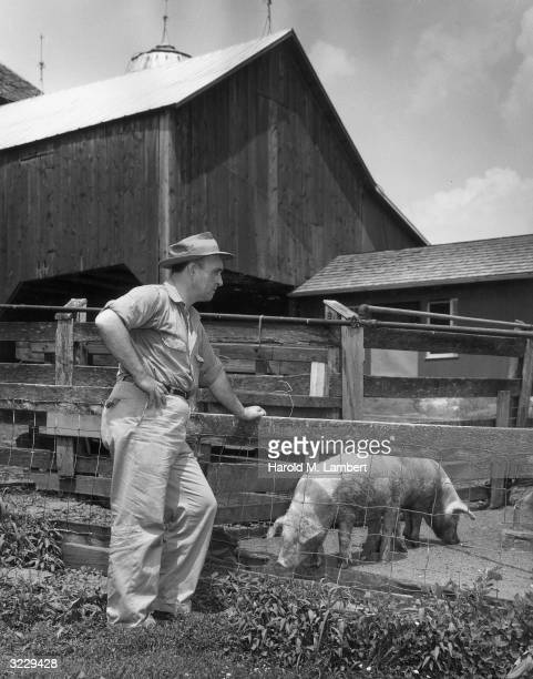 Farmer leans on a fence while watching two of his pigs eating from a trough at feeding time. A barn stands in the background.