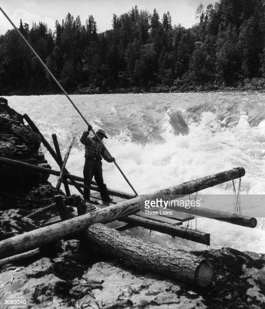 Man Indian salmon fishing with a long pole in the Bulkley River, northern British Columbia.
