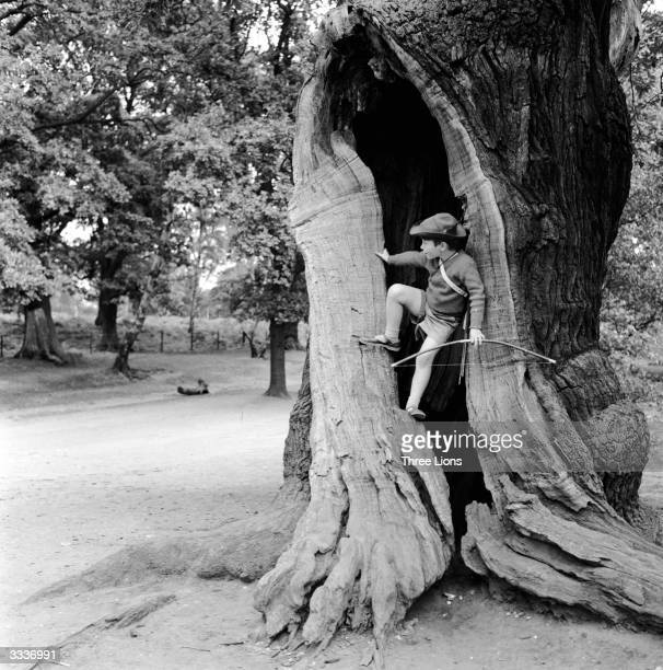 A young boy dressed as Robin Hood climbing into the hollow on oak tree in Sherwood Forest