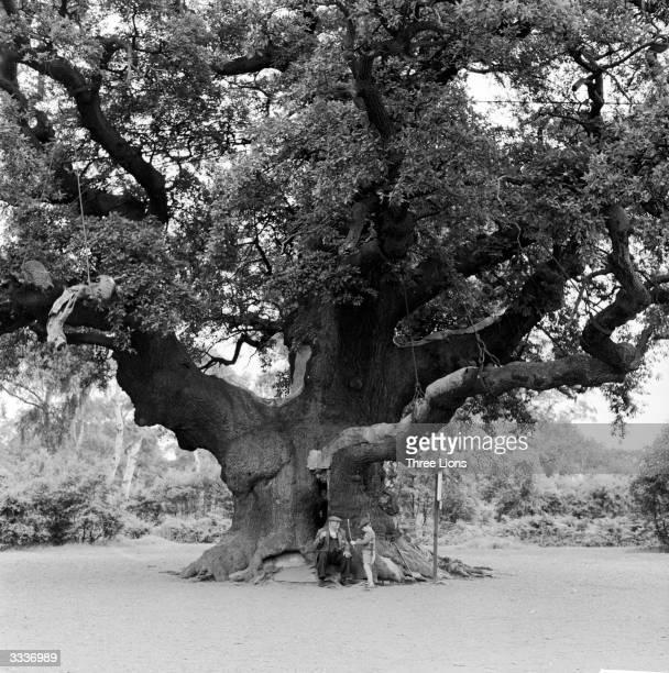 Major Oak in Sherwood Forest near Edwinstone