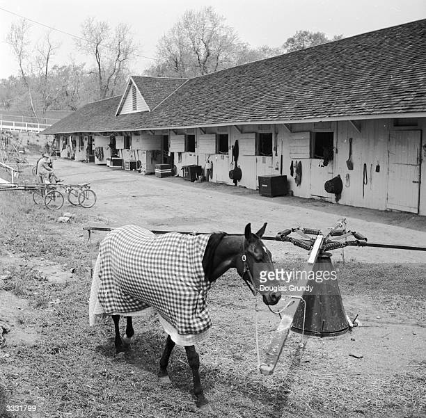 Warmy covered in a horse blanket one of the trotting horses walks round and round tethered to a selfexerciser One way of getting a workout before a...