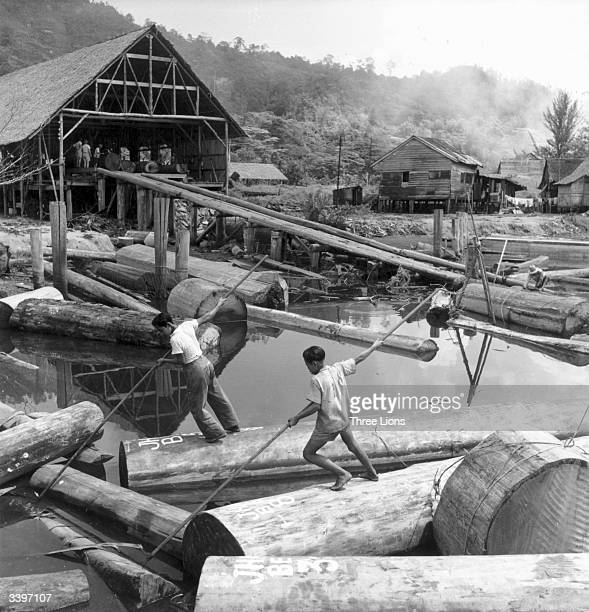 Workers in the timber trade on the island of Borneo
