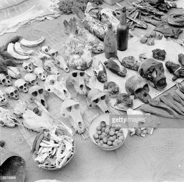 A collection of animal skulls on a witchdoctor's market stall in Mali The skulls are used by customers for medicinal purposes
