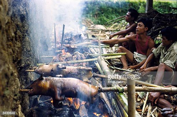 Pigs roasting on spits over an open fire in preparation for a Balinese feast