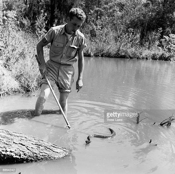 Robert Bridge a snake hunter in Reptile Jungle Slidell Louisiana fishing for a cotton mouth or water moccasin snake