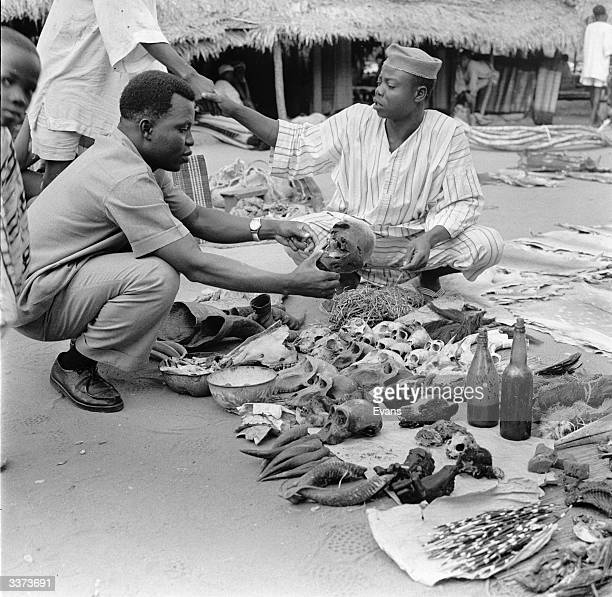 A man inspects the skull of an animal amongst the varied paraphernalia of a witchdoctor's stall in Mali The skulls are used for medicinal purposes by...