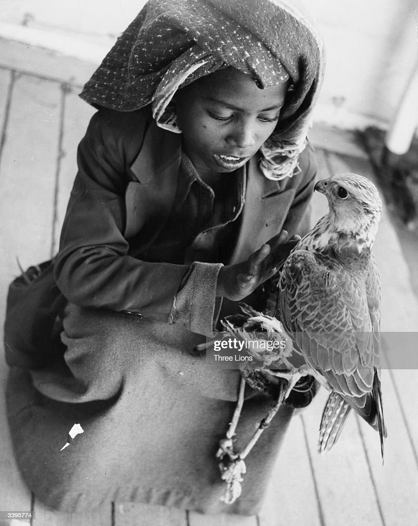 Young Falconer : News Photo