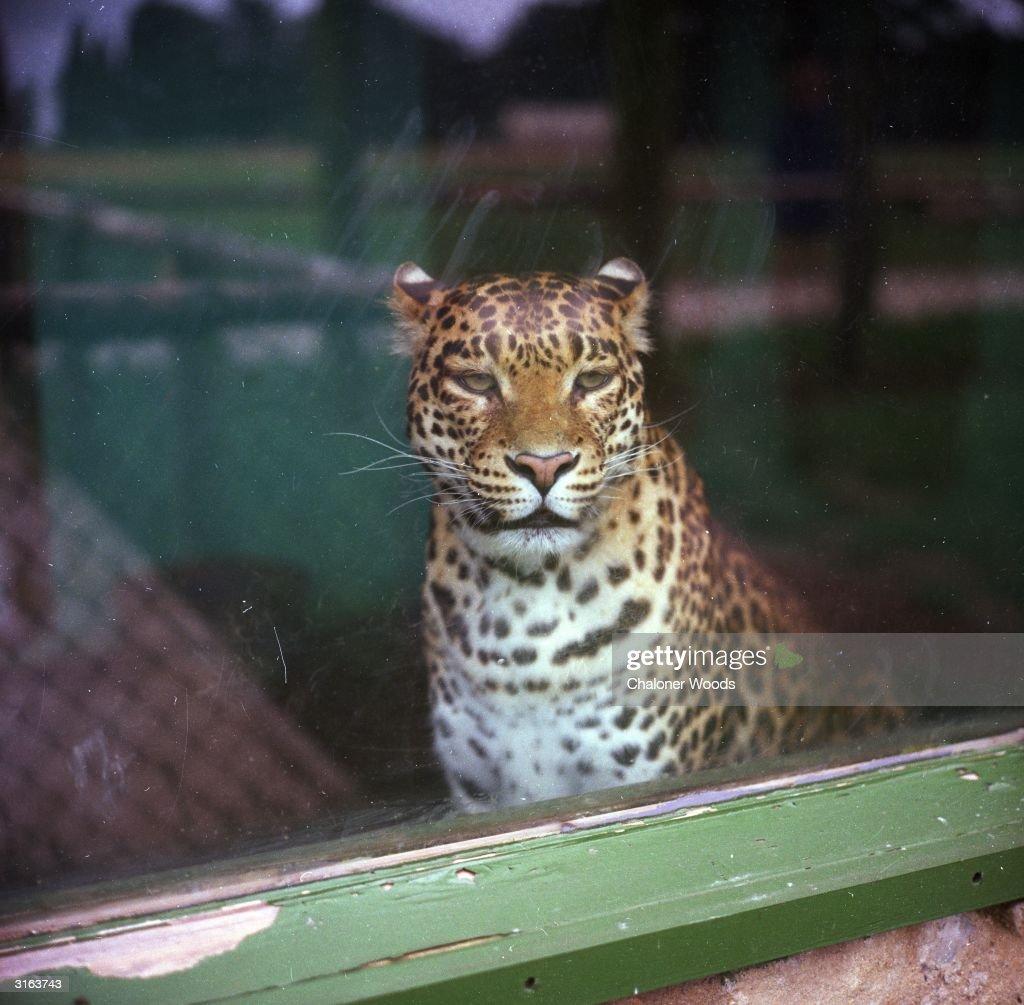 In Captivity : News Photo