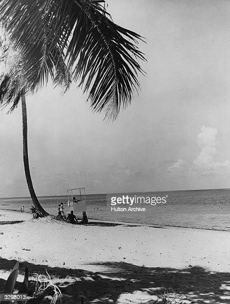 View of a Palm tree and sunseekers at Crandon Park Beach, Miami, Florida.