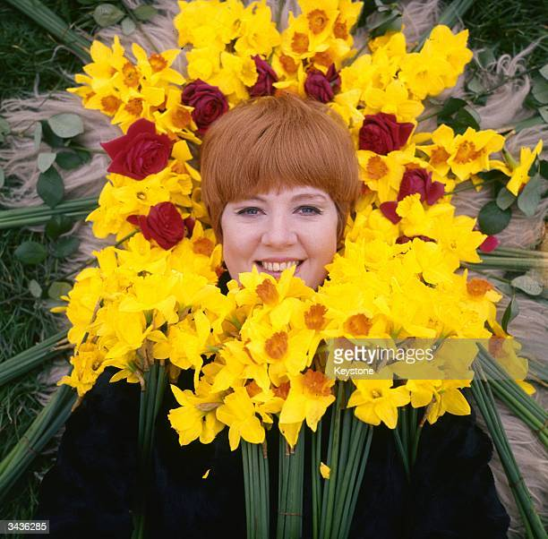 Cilla Black formerly Priscilla White a Liverpudlian singer discovered and managed by Brian Epstein framed by a heap of daffodils