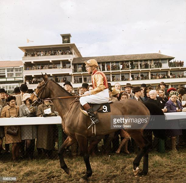 Irish jockey Pat Taaffe on French Tan at the Cheltenham Gold Cup