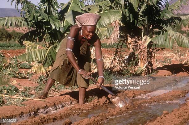 Full-length image of a Zulu woman irrigating her vegetable garden, Zululand, South Africa.