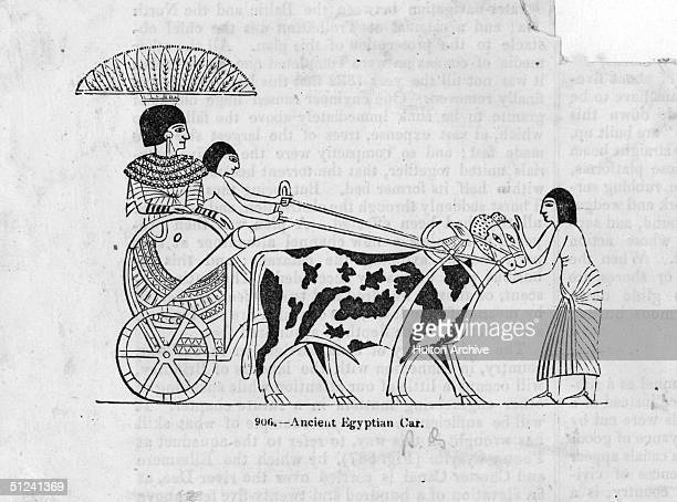 Circa 2000 BC Oxen drawing an ancient Egyptian two wheeled chariot