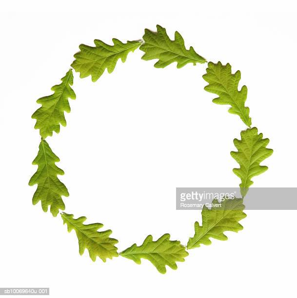 circle created using seven green leaves, on white background - oak leaf stock pictures, royalty-free photos & images